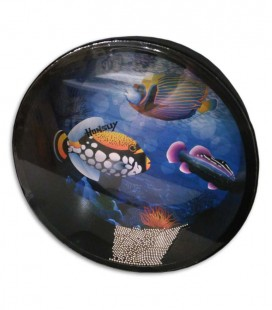 Ocean Drum Honsuy 43680 30cm
